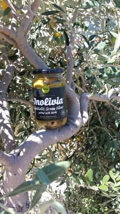 Inolivia Green Olives - The tree and its fruit. Olives, Seasons, Marketing, Fruit, Green, Food, Seasons Of The Year, The Fruit, Meals
