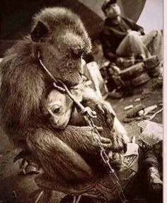 A mother and child. Abused and made to suffer. To those out there looking upon us, animal rights activists, as ''terrorists'', why aren't you instead, looking upon this as terrorism? Stop Animal Cruelty, Animal Testing, Animal Rescue, Tier Fotos, Animal Welfare, Animal Rights, My Heart Is Breaking, The Voice, Wildlife