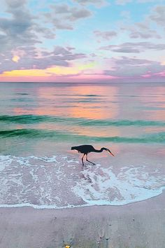 Clearwater, Florida                                                                                                                                                                                 More