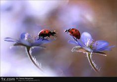 Frühlingsgeist