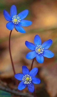 Great Pics Blue Flowers photography Tips Are you trying to keep a yard as part of your lawn? A person certainly goal rebuild spry and even more intere Flowers Nature, Exotic Flowers, Amazing Flowers, My Flower, Pretty Flowers, Flower Power, Wild Flowers, Bouquet Flowers, Beautiful Flowers Photos