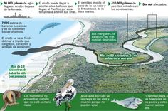 Un daño irreparable por derrame de petróleo en Tumaco - Semana.com