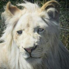 #Białylew #Borysew #Zoosafarii