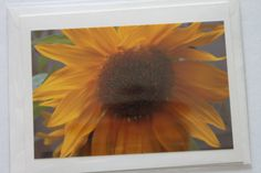 Sunflower Photo Note Card  Sunflower  Bland Note Card by manukai