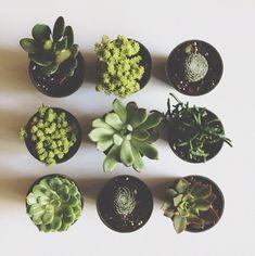 green/植物