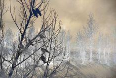 Tan Ravens | telluridephotographe Davos, Celestial