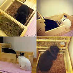 diy rabbit litter box that holds hay...o ya