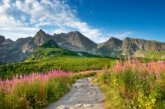 Comprehensive tourist travel guide through beautiful places in Poland Tatra Mountains, Travel Reviews, Beautiful Places To Visit, Warsaw, Ecology, Poland, Beautiful Pictures, Country Roads, Earth