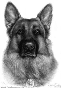 German Shepherd Drawing
