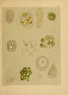 Untersuchungen über die mikroskopische Fauna Argentiniens. - Biodiversity Heritage Library