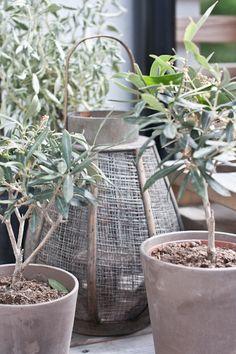 potted plants + lantern