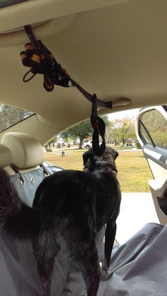 The dog car zipline is a dog car restraint that keeps your dog out of the front seat while still allowing him the freedom to walk across the back seat. Dog Belt, Dog Seat Belt, Seat Belts, Short Dog, Dog Car, Dog Runs, Back Seat, Pet Stuff, Squirrel