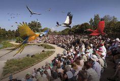 parc des oiseaux en Bourgogne de Villars les Dombes