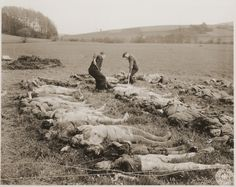Next Post Previous Post Two German civilians lay out the corpses exhumed from a mass grave in the vincinity of. Commonwealth, Nuremberg Trials, Horrible Histories, Global Conflict, Moment Of Silence, Lest We Forget, Felder, Second World, World War Ii