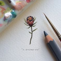 Day 255 : Protea Lepidocarpodendron | Blackbeard Sugarbush | Swartbaardsuikerbos. 14 x 29 mm. #365postcardsforants #miniature #watercolour #wdc624 #protea #flower #capetown #lovecapetown (at Table Mountain National Park)
