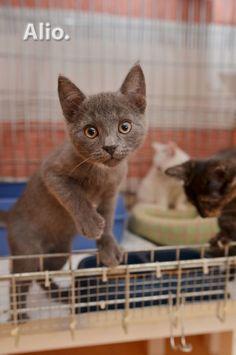 Dovanojami 2,5 mėn. keturi skirtingi kačiukai!