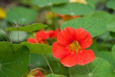 15 plantas que ajudam no controle de pragas na horta | CicloVivo