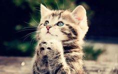 pleaseeee!