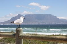 Hoerikwaggo, from the Khoi-San word meaning 'mountain in the sea' - aka Table Mountain, Cape Town, South Africa. Photo ©afrikani@ymail.com