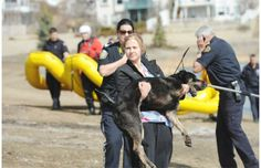 Amy Buijze, a vet tech with animal control, carries a dog too exhausted to walk after being rescued.