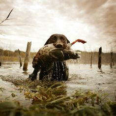 Here's to the best hunting buddy you could ever ask for.