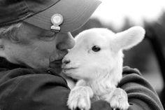 2012 bottle lamb