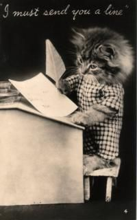 Harry Whittier Frees / baby animals / dogs and cats in clothes / miniatures Crazy Cat Lady, Crazy Cats, Vintage Cat, Funny Animal Pictures, Beautiful Cats, Cat Art, Pet Portraits, Animal Photography, Cats And Kittens
