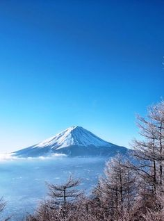 The kids and I landed in Japan (my husband had moved ahead of us with the dogs) on a Friday in August.  Eight days later we were summiting Mt. Fuji!  Really tough climb but awesome!