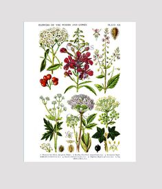 Woodland Decor English Wild Flowers Print by GnosisPictureArchive