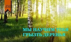 """Новая статья: """"Полезные свойства деревьев""""   http://journalman.ru/выживание/97-полезные-свойства-деревьев.html"""