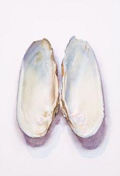 Saara Vainio: Näkinkenkä / Shell. Watercolour, 17 x 25 cm. 2010