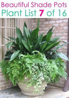 Create beautiful shade garden pots with easy shade loving plants & flowers. 16 colorful mixed container plant lists & great design ideas for shade gardens! – A Piece of Rainbow #backyard #gardens #gardening #gardeningtips #urbangardening #gardendesign #gardenideas #containergardening #diy #summer #spring #porch #patiodesigns #patio #curbappeal #flowers planters Shade Garden Plants, Patio Plants, Outdoor Plants, Garden Pots, Potted Plants For Shade, Shaded Garden, Planters For Shade, Outdoor Flower Planters, Part Shade Plants