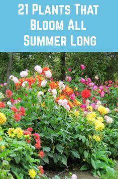 Enjoy these gorgeous blooms all summer long with these long-blooming plants. Summer Plants, Summer Flowers, Begonia, Organic Gardening, Gardening Tips, Beginners Gardening, Gardening Magazines, Gardening Gloves, Vegetable Gardening