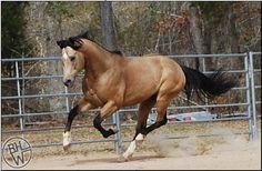 I'll take this exact horse