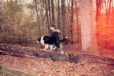 wie man seinen Hund im Wald sinnvoll beschäftigen kann