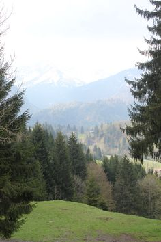 ~~~~~ N A T U R E  I S   C A L M I N G~~~~~ #alps#bavaria#obersdorf