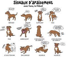 Parcachien.ca est un site pour des rencontres entre chiens, activités…
