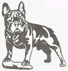 french bulldog coloring pages | Chitawee French Bulldogs | Southwest City, Missouri, USA - (500x519 ...
