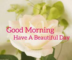 Looking for best Good Morning Wishes and Images with Rose? Check out our collection of beautiful HD Images, Pictures and Pics to send to your loved ones and spread a smile on their faces. Good Morning Romantic, Latest Good Morning Images, Good Morning Beautiful Pictures, Good Morning Msg, Good Morning Roses, Morning Pictures, Beautiful Gif, Beautiful Roses, Pretty Pictures