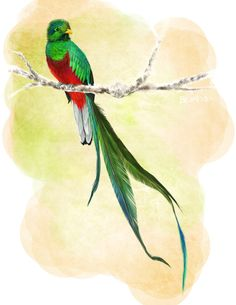 quetzal vector - Google Search