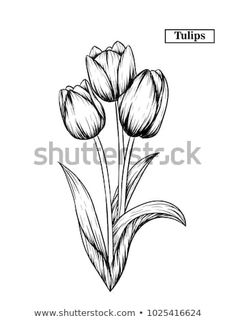 Draw Flower Patterns Hand drawn illustration and sketch Tulips flower. Black and white with line art illustration.Idea for business visit card, typography vector,print for t-shirt. Tulip Tattoo, Tulip Drawing, Line Art Drawings, Tulip Painting, Watercolor Flowers Paintings, Pencil Drawings Of Flowers, Flower Sketches, How To Draw Hands, Flower Sketch Pencil