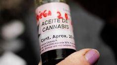 #Diputados debatirá la adhesión de Entre Ríos a la Ley de Cannabis Medicinal - El Día de Gualeguaychú: El Día de Gualeguaychú Diputados…