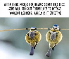 27 Totally Useless Animal Facts That Will Make You Laugh - BlazePress