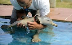 THE MOST CUTE BABY DOLPHIN