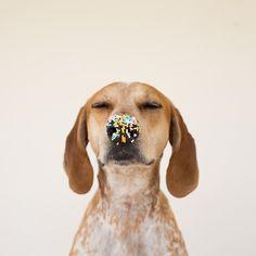 Cutie sprinkle snout.