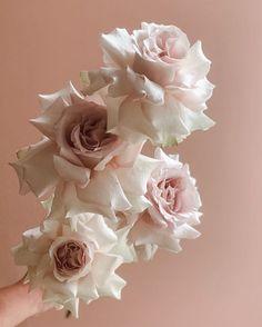 #byronbay #florist #wedding #bridal #bouquet #bespoke #weddingplanning #inspo #flowers Byron Bay Weddings, Wedding Vendors, Wilderness, Wedding Planning, Bouquet, Bridal, Rose, Instagram Posts, Flowers