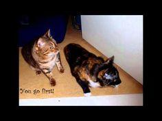 Curious Kitties - cute :)
