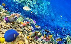 Arrecifes de coral, Lanzarote