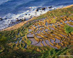 These are rice fields in Japan. Japan is a large producer of rice.