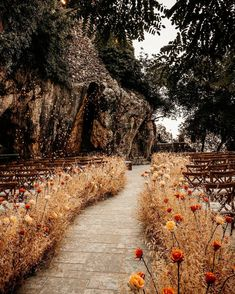 We just found the dreamiest spot for your fall wedding ceremony 🍂 Swipe and let us know your thoughts !! ____________________ ▪︎Wedding planner and designer : @strawberriesandchampagne_ ▪︎Photographer: @dazlproduction . ▪︎Wedding flowers : @ronibassil